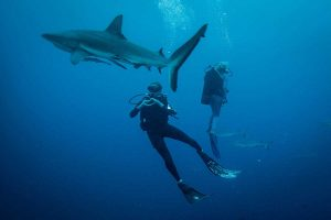 Divers with Blue Shark